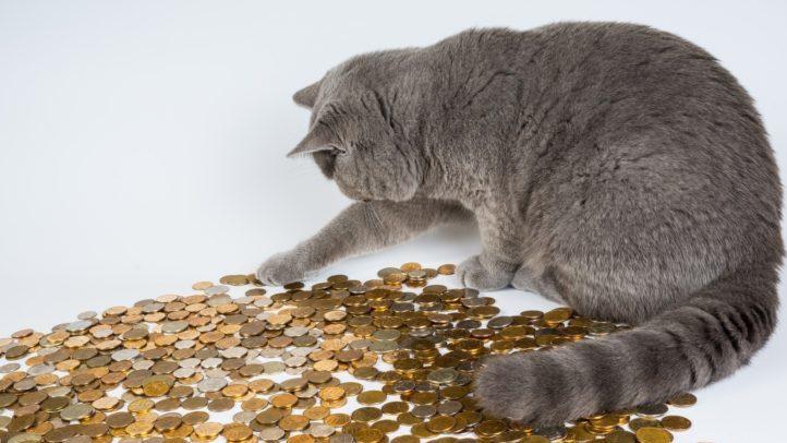 猫がコインを触る